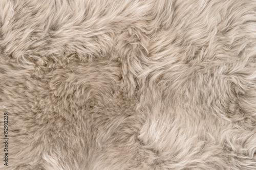 Fototapeta Natural sheepskin rug background texture sheep fur