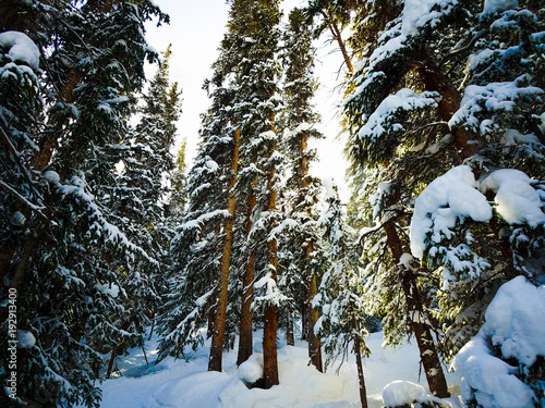 Fotografie, Tablou Keystone pinetrees