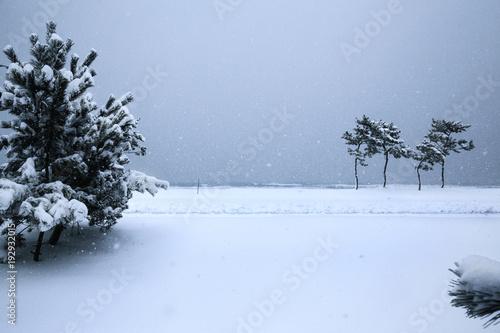Fotografía  겨울풍경