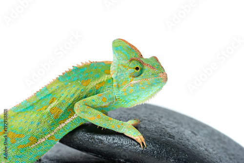 Photo sur Aluminium Cameleon close-up view of cute colorful chameleon on stones isolated on white