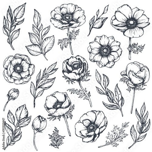 Fotografie, Obraz Vector collection of hand drawn anemone flowers
