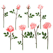 Vector Set Of Pink Roses. Four...