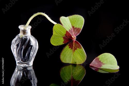 Valokuvatapetti Unlucky leaf