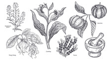 Set Of Imedical Plants, Flowers And Herbs.