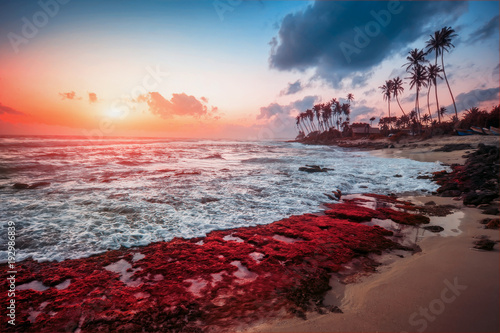 exotic ocean beach on sunset. natural summer background