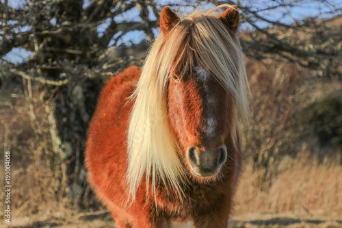 The Wild Pony of the Grayson Highlands Poster