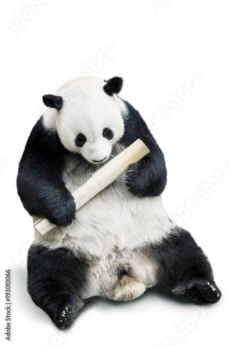 Autocollant pour porte Panda Panda eating bamboo isolated over white