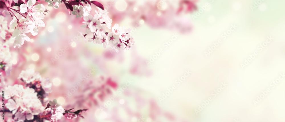 Fototapeta Kirschblüten im Frühling