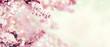 canvas print picture - Kirschblüten im Frühling