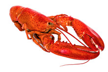Boiled American Lobster On Whi...