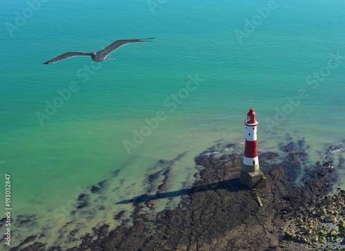 Fototapeta Seagull i latarnia morska na słonecznym dniu w Siedem siostrach, Anglia.