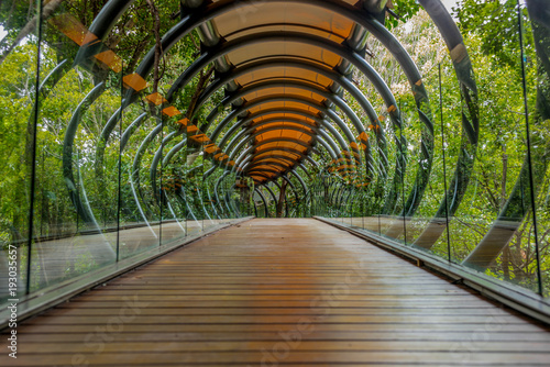 A suspended glass, wood and metal bridge in the forest around Johannesburg in South Africa -2