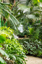 Indoor Of The Tropical Jungle Greenhouse. Tropical Fresh And Exotic Plants