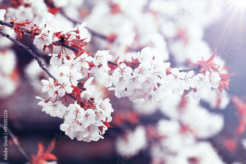 wiosna-jest-tutaj