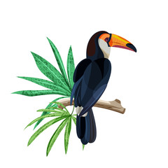 Obraz Tropical bird toucan is sitting on branch with green tropical leaves. Vector hand drawn illustration isolated on white background.