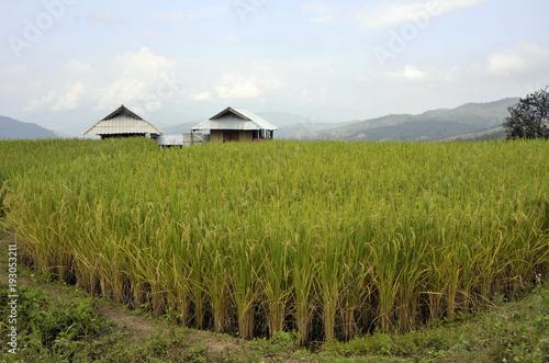 Foto auf Gartenposter Reisfelder Doi Inthanon