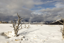 Snowy Landscape In Mammoth Hot Springs, Yellowstone National Park, Wyoming