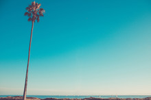 California High Palms On The B...