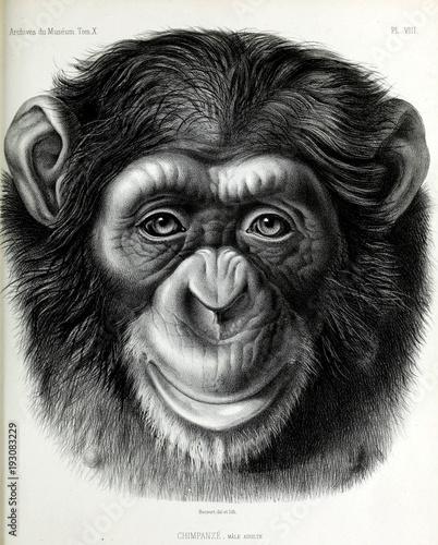 Photo Illustration of monkey
