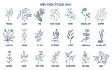 Collection Of Natural Herbs Fo...