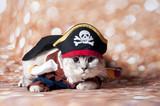 pirat cat