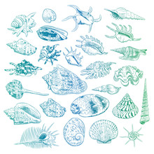 Unique Museum Collection Of Sea Shells Rare Endangered Species, Molluscs Bivalvia Venus Comb Murex Corculum Cardissa Tridacna Squamosa Muricidae Blue Green Contour On White Background. Vector