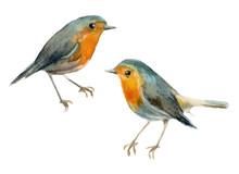Watercolor Birds Robin. Elemen...
