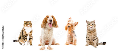 Poster Chien Group of dogs and cats, isolated on white background