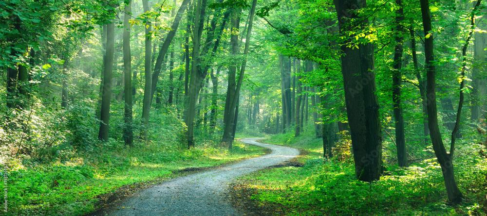 Fototapeta Wanderweg windet sich durch sonnigen grünen Wald