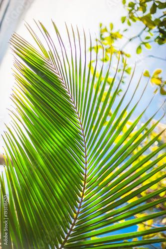Palm leaves background, beautiful tree, Palm Sunday Wall mural