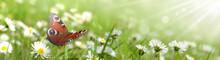 Schmetterling 431