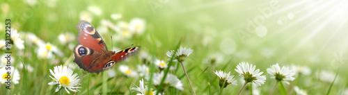 Foto op Canvas Pistache Schmetterling 431