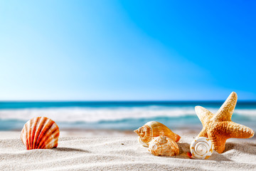 FototapetaSummer beach and shells with blurred blue sea and sky