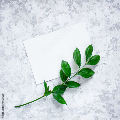 Keuken foto achterwand Bloemen Green branches with leaves on light textured background. Botanical minimalistic background with copy space