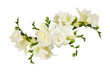 White Freesia Flowers In A Bea...