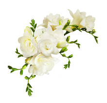 White Freesia Flowers In A Bea...