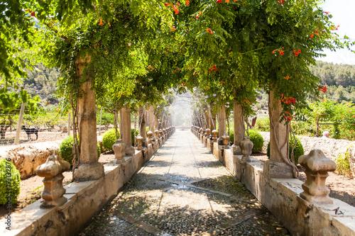 Fototapeta park alfabia-gardens-in-mallorca