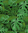 Hand drawing a Seamless pattern of tropical palm leaves. Vector background of green foliage on a black background