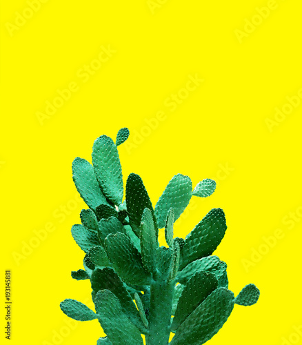 Foto op Canvas Cactus Card with Huge Opuntia cactus. Creative layout. Minimal style still life.