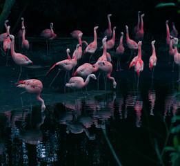 Fototapeta Zwierzęta flamingo