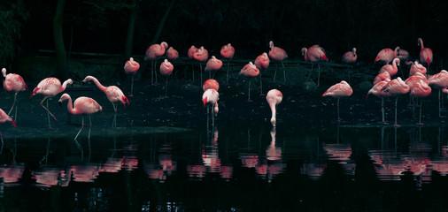 Panel Szklany Do kuchni flamingo