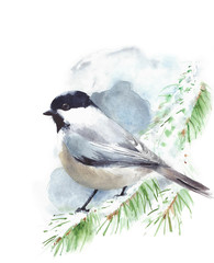 FototapetaChickadee bird sitting on the branch watercolor painting illustration isolated on white background
