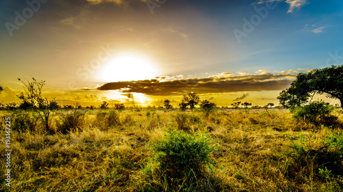 Poster Miel Sunrise over the savanna and grass fields in central Kruger National Park in South Africa