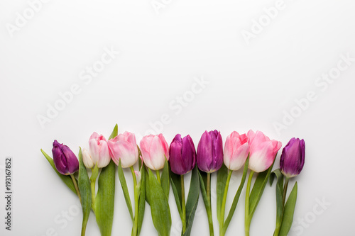 Foto op Plexiglas Tulp Pink and purple tulip flowers on white background. Flat lay, top view.