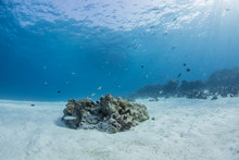 Underwater Seascape With Natur...