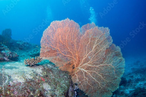 School of tropical fish on the colorful underwater coral reef. Scuba diving with sea wildlife. Snorkeling on the reef with fish. Sea lily, corals and anthias fish.