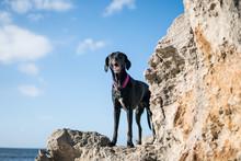 Fotografía De Un Perro En Las...