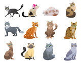 Fototapeta Child room - Vector Funny and cute cartoon Cat different breeds pet characters set.