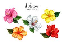 Vector Realistic Hibiscus Flower Leaves Set
