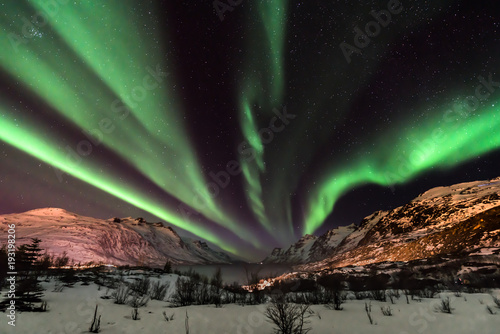 Poster Aurore polaire Aurora Borealis (northern lights) in North Norway - Tromso, Kvaloya, Ersfjordbotn
